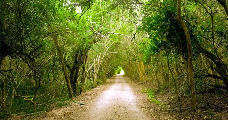 Parque Santa Teresa en Rocha